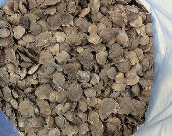 50   Pterocarpus santalinus ,Red Sandalwood  seeds