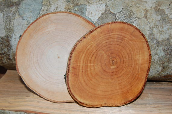 14 unique unfinished wood slices x 5 x 25 natural for How to cut wood slices