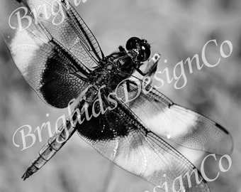 Dragonfly Photo Download