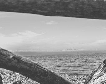 Ocean View through Driftwood
