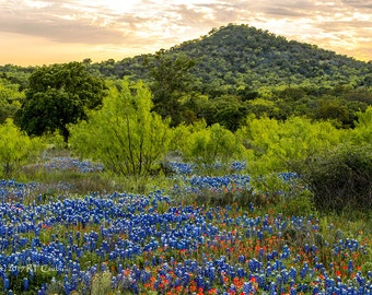 Bluebonnets and Hill in Late Afternoon