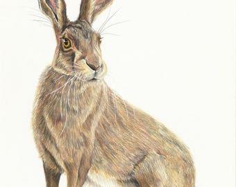 Hare Fine Art Giclee Print