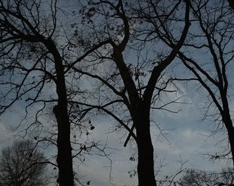 Canvas Print 8x10 Treetop Night