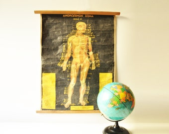 Vintage Human Body Anatomy - Original Vintage Pull Down Anatomy Chart - Medical - School Chart