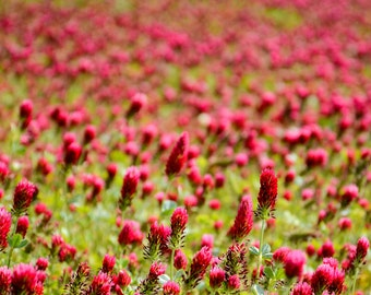 Red flowers on green grass