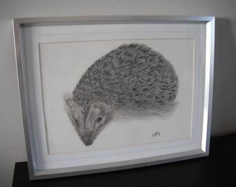 A4 Hedgehog Pencil drawing