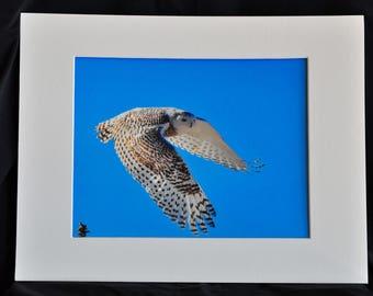"Snowy Owl Art, Owl Photography,Owl Art Print.""Snowy Owl in flight""."