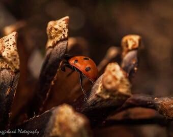 Ladybird cone climbing
