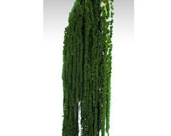 Hanging Amaranthus | Amaranthus Hanging | Cascading Flowers | Preserved Flowers
