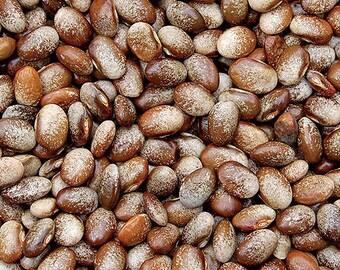 Organic Turkey Craw POLE  Bean ----Rare----25+ Seeds