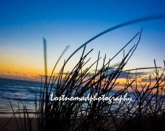 Sunset through the reeds at Collendina