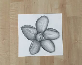 Flower Drawing - Charcoal