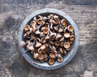 120 Natural Oak Acorn Caps