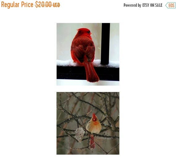 "50% OFF SALE Cardinal Photos, Nature Pictures, Birds, Animal photography, Gift Set of f Two 5x5 inch Red Cardinal Photos, Parents - ""Cardina"