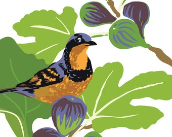 Varied Thrush in Fig Tree : Box of 8 A2 folding blank cards