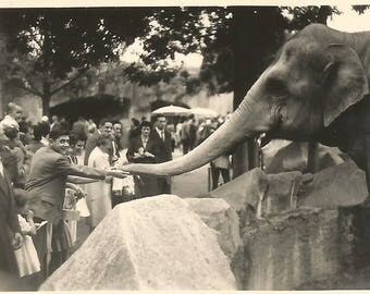 Vintage Antique old French real photography black & white  1950 Elephant at the zoo de Vincenne Paris