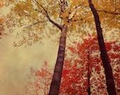 Autumn Art - Michigan Art - Michigan Photograph - Fall Decor - Nature Print - Tree Print - Nature Photography - Large Wall Art - Red - Gold
