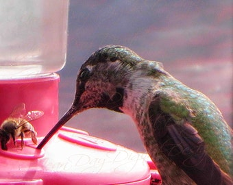 Competition or Sharing? Photo Art by Jean Day, Hummingbird and the Bee Instant Digital Download, Gift Tag or Photo Artwork PC001