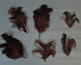 Lot of 6 Vintage Millinery Hat Feathers, Dark Burgundy Brown, 4 to 8 inches, 1800s 1900s Victorian Edwardian Black Plumes Feathers