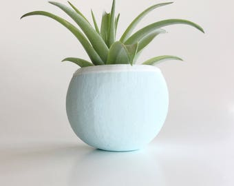 The Seed Pod With Air Plant - Airplant - Airplants - Minimalist- Brachycaulos - Air Plants - Epiphyte - Plant - Modern - Home - Beach