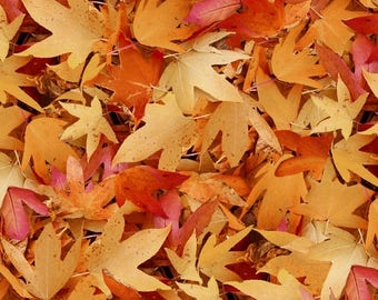 Fall Leaves Natural Treasures Blank Quilting Fabric 1 yard