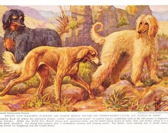 1930s Afghan Hound Dog Print -  Vintage Antique Animal Pet House Home Decor Book Plate Art Illustration for Framing