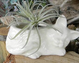 Cat  Planter Sleeping Kitten Kitty Modern  Ceramic White ceramic glazed container Succulent FLower Vase Sponge holder