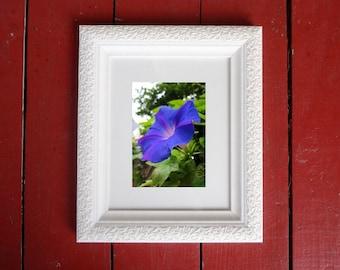 Photograph: Blue Flower 5x7 print Nature Photography