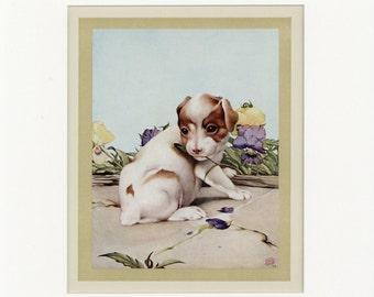 Beautiful Domestic Farm Animals Vintage 1921 Dogs Days Print