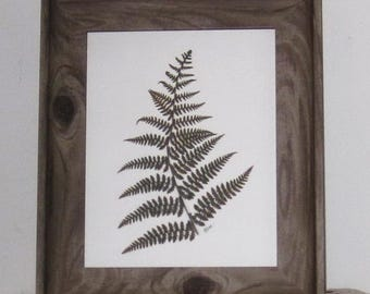 spectacular real fern 8x10 in 11x13 barnwood look frame