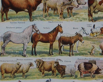 Vintage French original book plate of Domestic Animals illustration by Adolphe Millot Nouveau Larousse Universel Published 1948