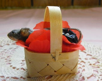 Taxidermy Mouse in a Vintage Basket with Flower Petals. Carl.