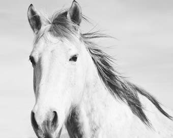 White Horse Print | Horse Photography in Black and White