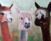 ALPACA PRINT & MAT Whimsical Alpaca Barnyard Animals Farm Art Kid's Decor Kitchen Decor Alpaca Lovers Alpaca Portrait Karen Snider