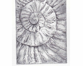 Original ammonite fossil zinc etching no.19 jurassic Dorset coast fossil spiral fossil ammonites golden section