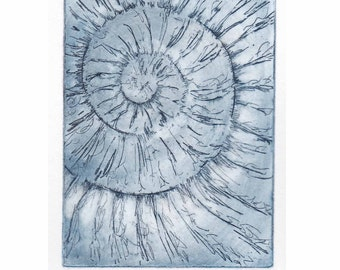 Original ammonite fossil zinc etching no.32 jurassic Dorset coast fossil spiral fossil ammonites golden section