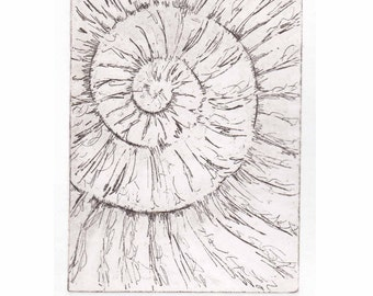 Original ammonite fossil zinc etching no.45 jurassic Dorset coast fossil spiral fossil ammonites golden section