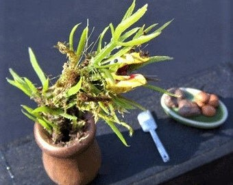 Dollhouse Miniature Addams Family MAN EATING PLANT Spooky Halloween Witch Haunted Doll House