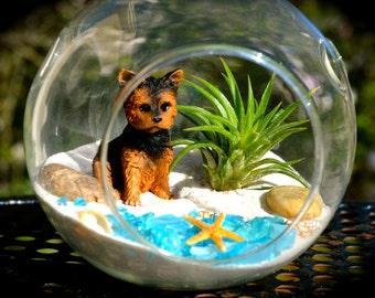 Dog Terrarium Kit ~ Glass Hanging or Sitting Terrarium with Air Plant ~ Cute terrier at Beach ~ Starfish ~ Beach Terrarium ~ Gift Idea
