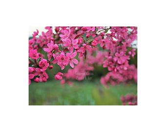Nature Photography. Pink Blossoms. Floral Art. Landscape Photography. Crabapple . Pink Green Home Decor. Spring. Sonoma. Wall Art. Colorful