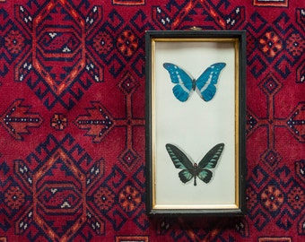 Vintage Framed Butterfly Wall Hanging