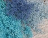 real Dried Baby breath, Dried Baby Blue Gypsophila, Blue Baby Breath