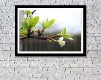 Spring Apple Tree Blossom photography instant download, nature photography, wall home decore, nature photo, downloadable print, wall picture