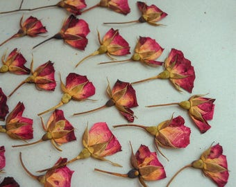 Mini Red Roses Pressed Dried with Stem Real Flowers