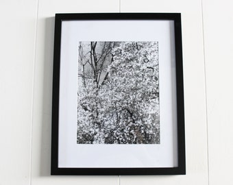 black and white vintage nature photography, outdoor photography, forest, art, wall art, artwork, vintage art, black white photos