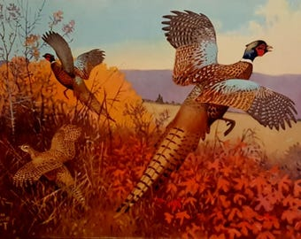 Vintage Pheasant Lithograph Lynn Bouge Print Large Lithograph Titled  Autumn Splendor Colored Wildlife Print Cockbird Pheasants in Flight