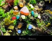 "Glass Beach Photo Book 8x11  ""The Coves"""