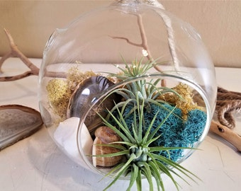 Air plant terrarium kit - Polished agate - DIY planter - Crystal - Hanging globe - air plant - Reindeer moss- Glass terrarium