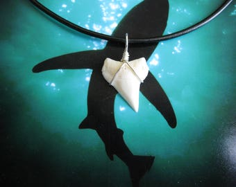 Shark Tooth Necklace, Modern Day White Shark tooth, Silver plated wire, Leather cord