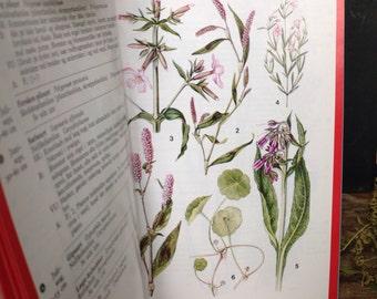 Vintage book on flowers botanic plants print